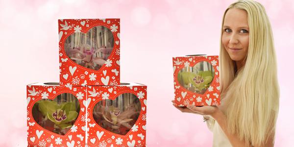 Valentýská krabička s květem orchideje
