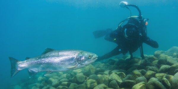 Zkušební ponor na lomu Srní: 30 minut pod vodou