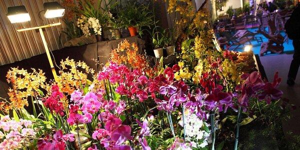 Drážďany: výstava orchidejí a prohlídka města