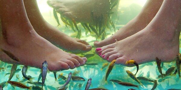 Koupel s rybkami Garra Rufa: péče o vaše nožky