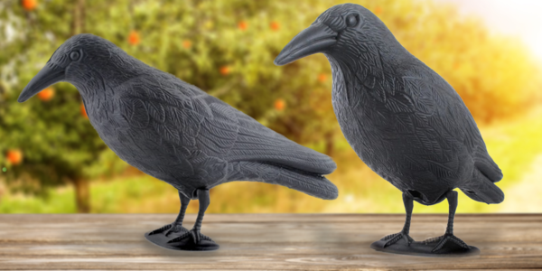 Maketa havrana na odpuzování holubů