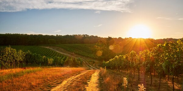 3denní pohoda na vinicemi porostlé Pálavě