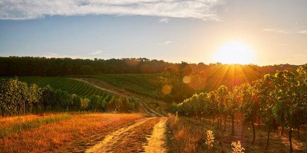Babí léto na Pálavě mezi vinicemi se skvělým menu
