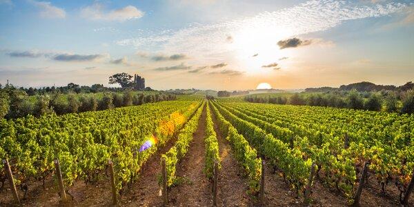 Zážitky mezi vinicemi: wellness, polopenze a víno