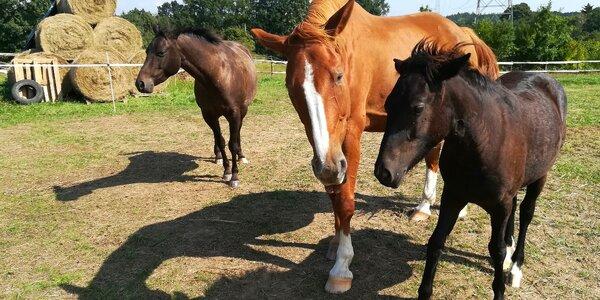 Procházka s koněm a průvodcem pro 4 osoby