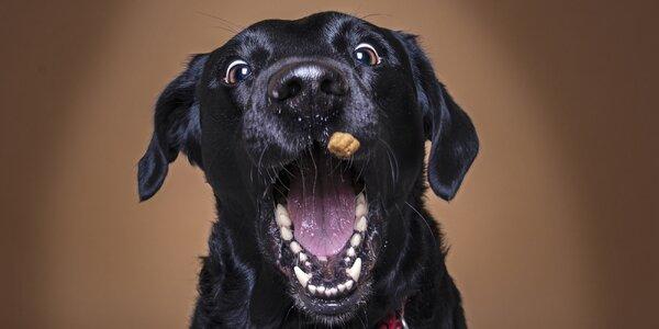 Profesionální focení vašeho psího kamaráda