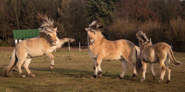 Zimní radovánky na koních pro 1 až 4 osoby najednou