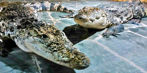 VIP prohlídka Krokodýlí zoo i s krmením krokodýlů