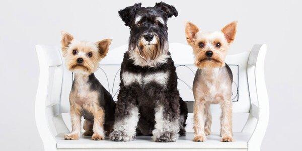 Čas pro psí miláčky: wellness nebo kompletní péče