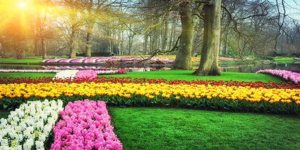 Den královny v Amsterdamu, tulipány v Keukenhofu