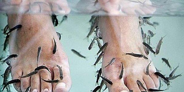 170 Kč za 45minutové ošetření Garra rufa rybičkami v hodnotě 350 Kč