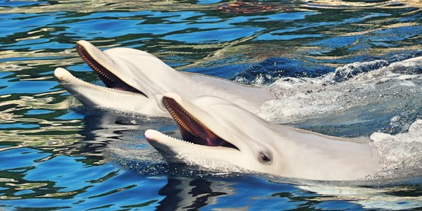 1denní výlet do Norimberku a zoo s delfináriem