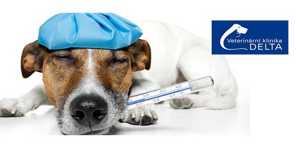 Očkování pejsků proti vzteklině a infekčních chorobám