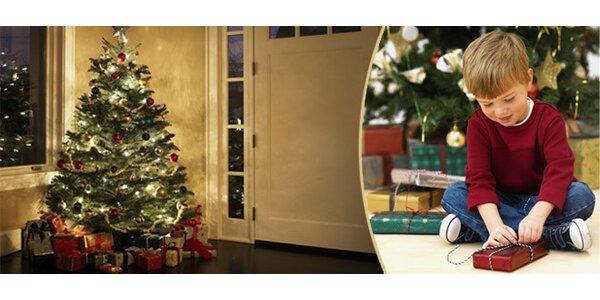 Živý vánoční stromek - borovice černá nebo borovice lesní