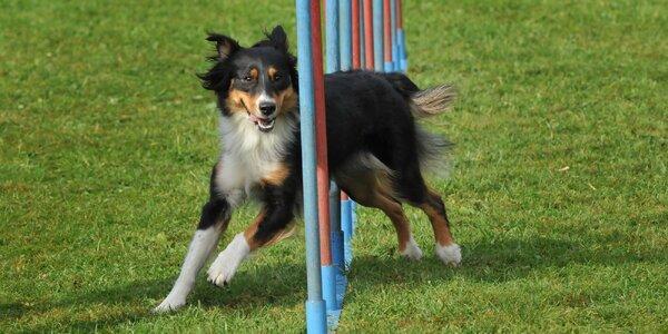 Vstup na psí cvičiště i individuální konzultace