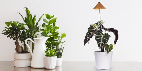 Sunlite: lampička pro krásu i vitalitu vašich rostlin