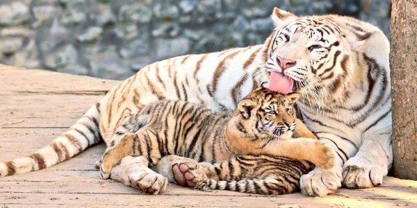 S rodinou za zvířátky: vstup do Zoo Plasy