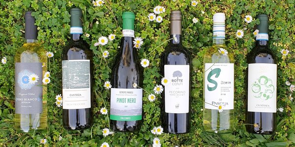 Vína ze slunné Itálie: sety 6 lahví