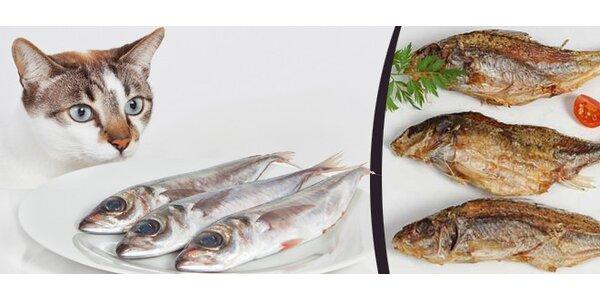 Sušené rybí pamlsky pro pejsky i kočičky