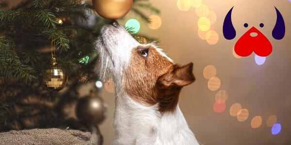 Udělejte opuštěným zvířátkům krásné Vánoce