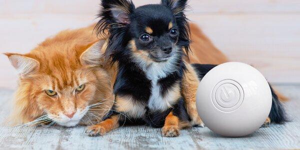 Chytrý míček Aila pro malá plemena psů a kočky
