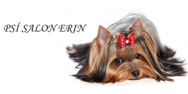 Kompletní úprava vašeho psího miláčka v psím salonu Erin