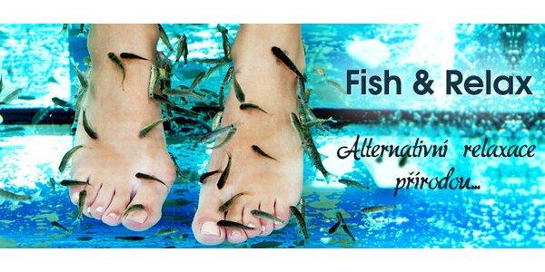 Lázeň s rybkami Garra rufa pro ruce, nohy či celé tělo