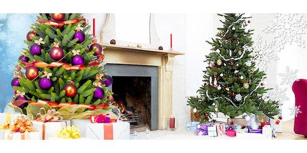 Živý vánoční strom - český smrček