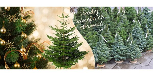 Smrčky a borovice z rodinné farmy na Vysočině