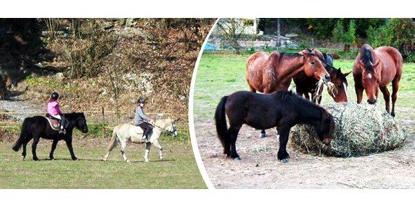 Jízdy na koních pro začátečníky i pokročilé jezdce