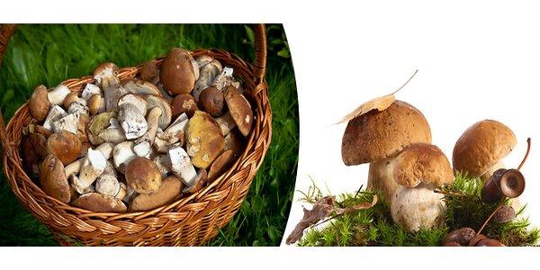 Sadba lesních hub včetně poštovného