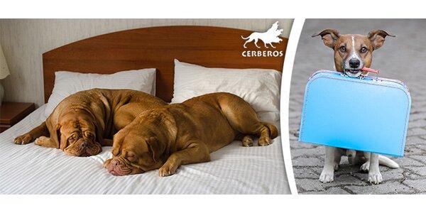 Ubytování mazlíčka v psím hotelu na 1 i 7 a více dní