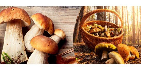 Mix sadby lesních hub