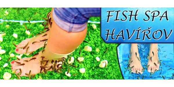Pedikúra rybičkami Garra Rufa - Havířov