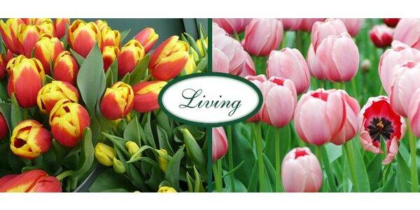 299 Kč za 25 pravých holandských tulipánů s dopravou po Praze zdarma!