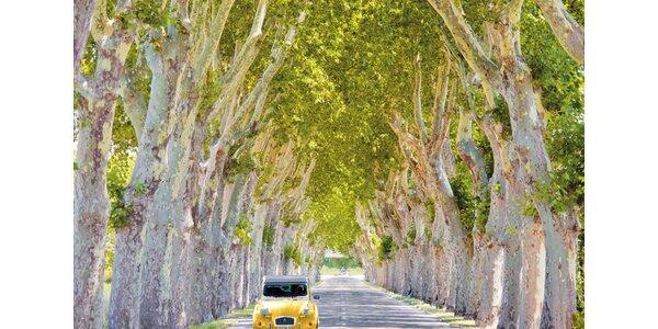 Žluté auto v aleji