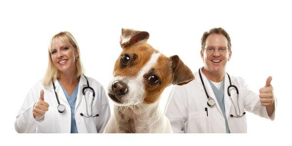 Odstraňování zubního kamene ultrazvukem pro psy i kočky