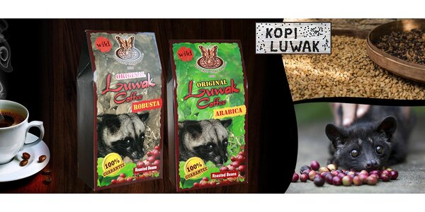 50 g exkluzivní cibetkové kávy Kopi Luwak