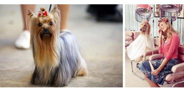 Salon na úpravu a stříhání psů