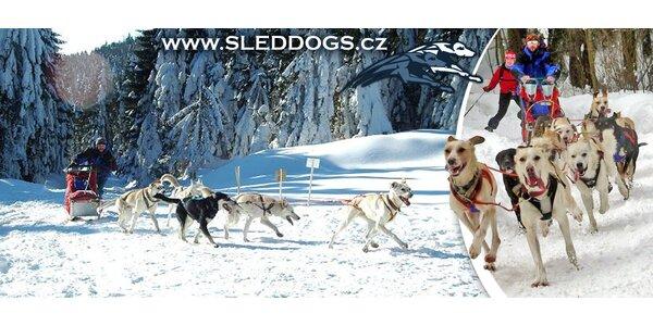 Hodinová jízda na psím spřežení v předhůří Šumavy