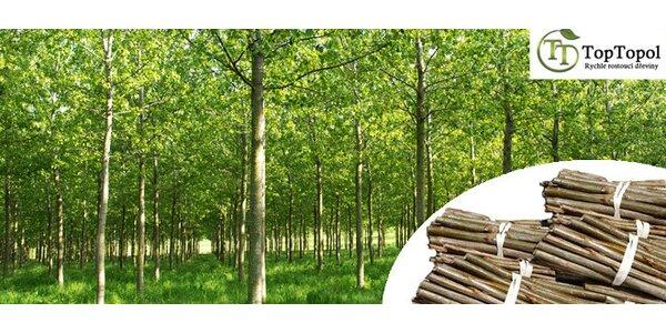 Palivové dřevo - rychle rostoucí japonský topol
