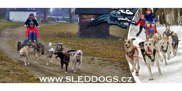Jarní hodinová jízda na psím spřežení na Šumavě
