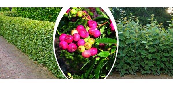 Zajímavé zahradní sazenice