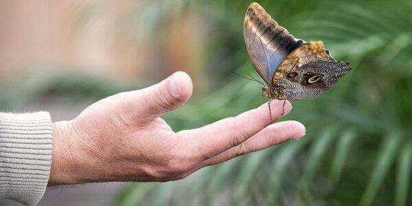 Vstupenky do Motýlího domu