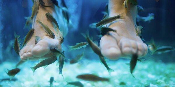 Relaxační lázeň s rybičkami Garra Rufa