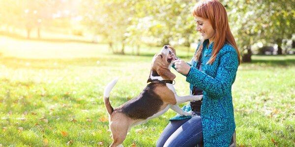 Online videokurz výcviku a péče o štěně a psa