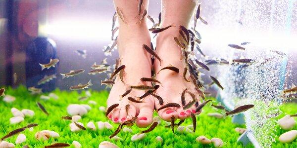 Lázeň pro nohy s rybkami Garra Rufa