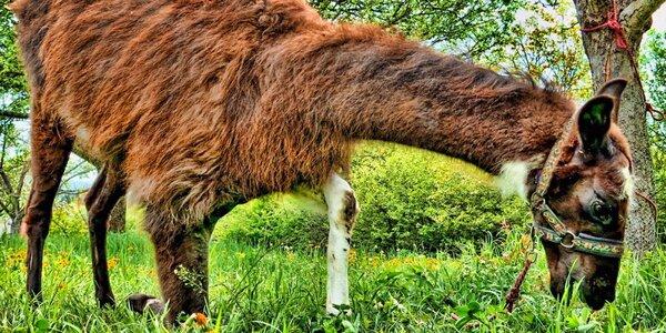 Dovádění se zvířátky v ZOO koutku u Nováčků