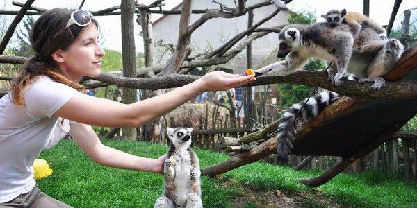 Krmení zvířátek v Zooparku Zájezd