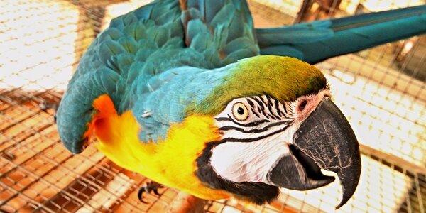 Rodinná vstupenka na prohlídku exotických rostlin a zvířat